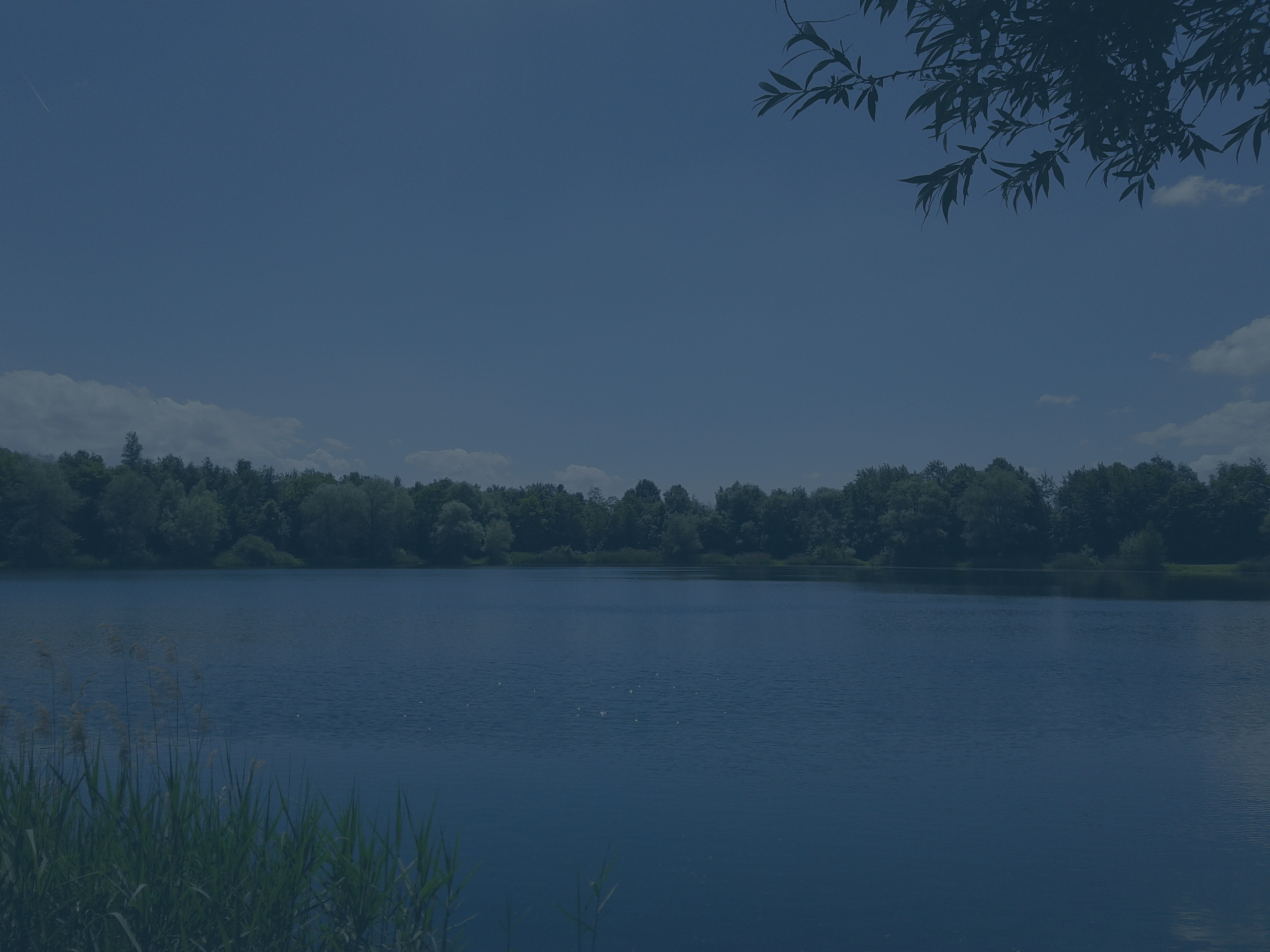 An image of a lake near Karlsruhe. It is a very peacefull place. No trace of humans. In the foreground on the left there is some tall grass. It is a warm summer day with only a few clouds.